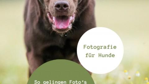 Tipps für's Fotoshooting mit Hund, Hundefotografie, Fotografie