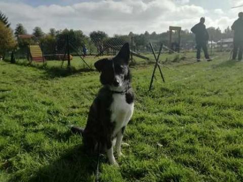 Lecker Schmecker, Eierlauf & Hunderennen – Hundeolympiade in Coppenbrügge