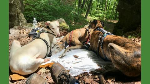 Wandern mit Hund auf den Peilstein, Wienerwald, Niederösterreich