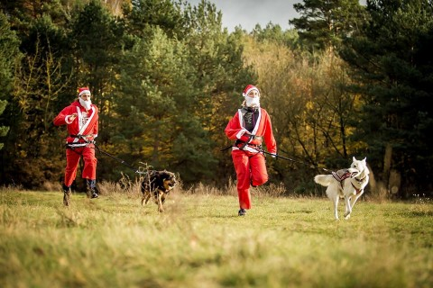 Der Camp Canis ADVENT(ure)SKALENDER!