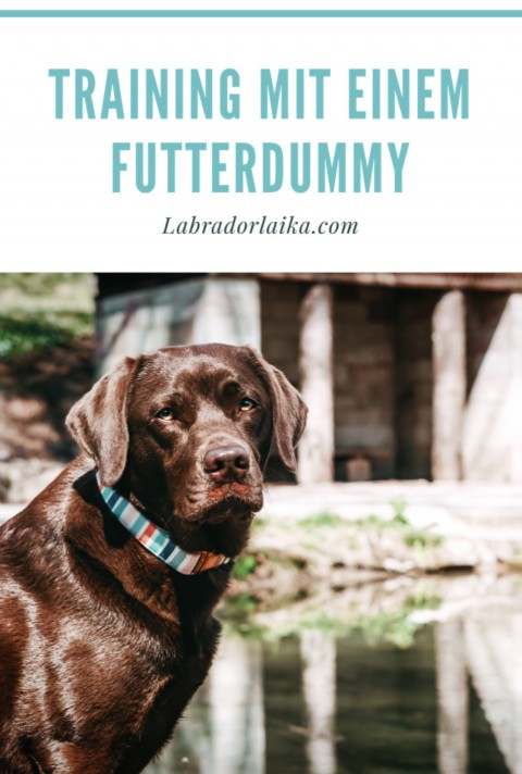 Training mit einem Futterdummy – Hunde beschäftigen