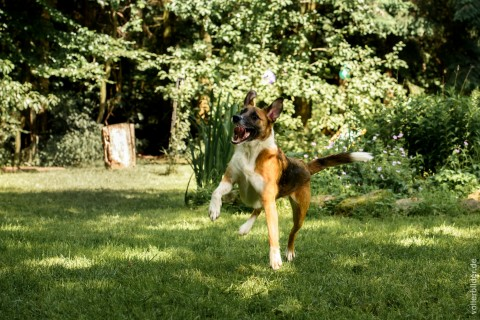 Vom Straßenhund zum Lieblingshund
