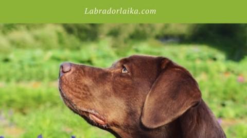 Urlaub mit Hund- das darfst du nicht vergessen