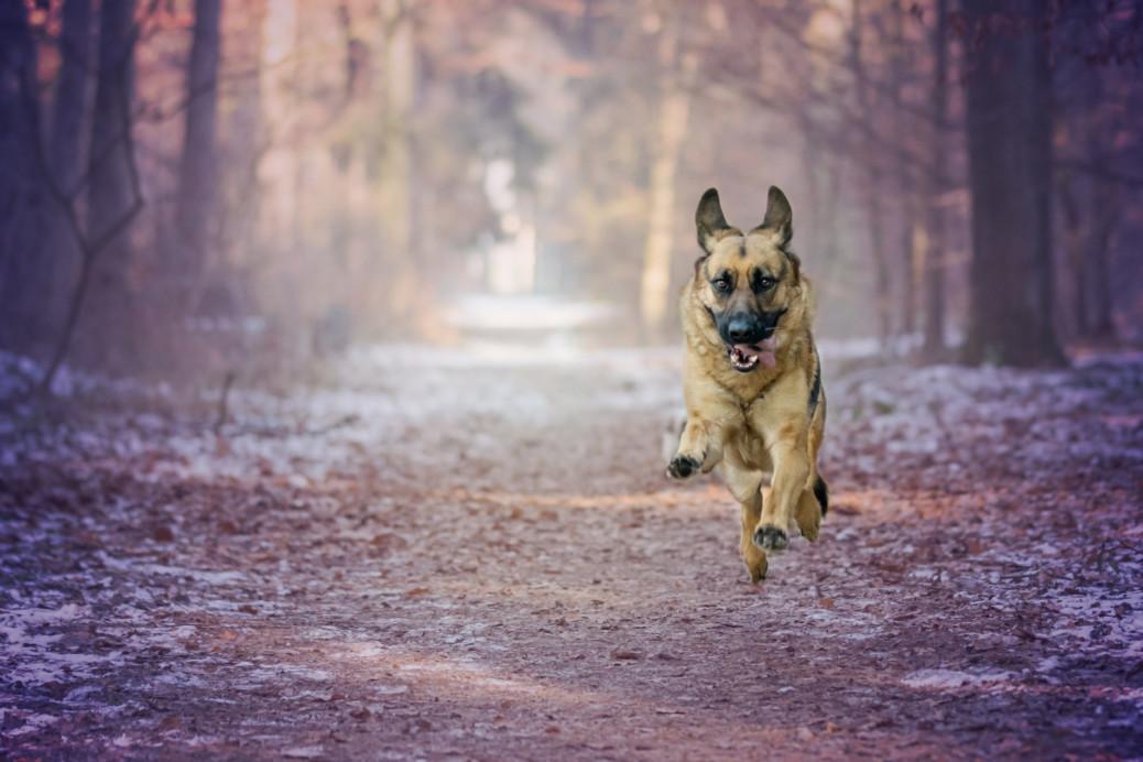 Blutegeltherapie für Hunde
