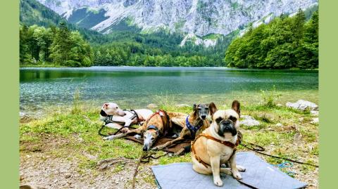 Urlaub mit Hund im Salzkammergut – Unterkunft und Wanderungen rund um Bad Ischl – Teil 1