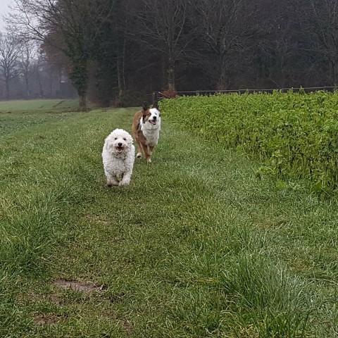 Hund entlaufen – Was ist jetzt zu tun??