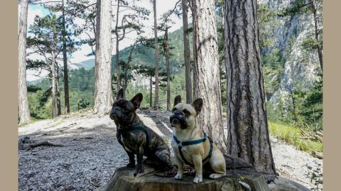 Wandern mit Hund im Höllental an der Schwarza, Niederösterreich.