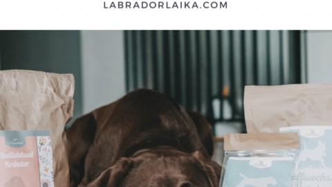 Naturheilkunde- Kräutermischungen für Hunde