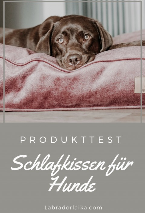 Produkttest: Schlafkissen für Hunde von Pepinjo Dogdesign im Test