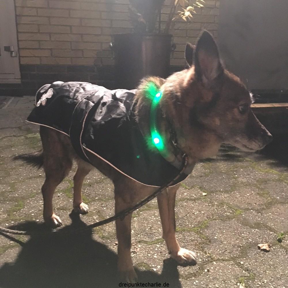Mantel Hund