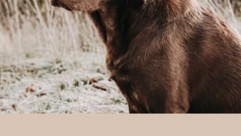 Die 6 wichtigsten Signale in der Hundeerziehung