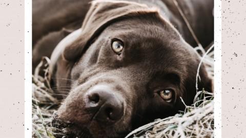 Die richtige Ausrüstung für Hundefotografie