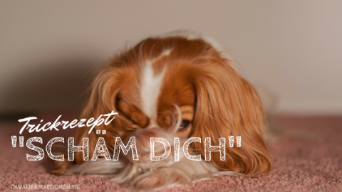 "Trickrezept: ""Schäm dich"""
