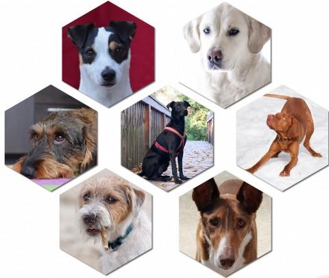 DNA Test für Hunde – die Ergebnisse