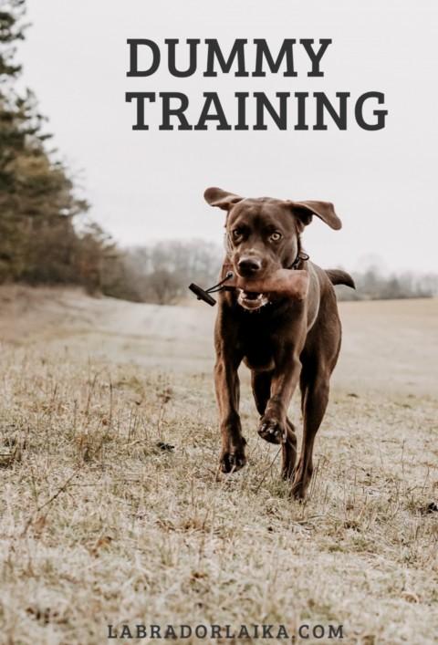 Dummytraining für Hunde – So geht's