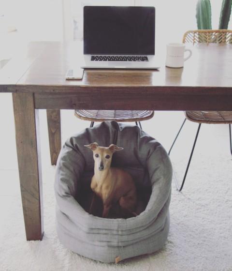 4 Tipps für einen entspannten Büroalltag mit Hund [Anzeige]