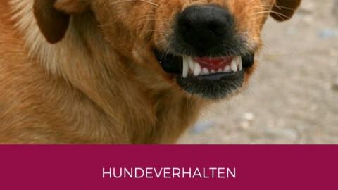 4 Schritte Training für aggressive Hunde