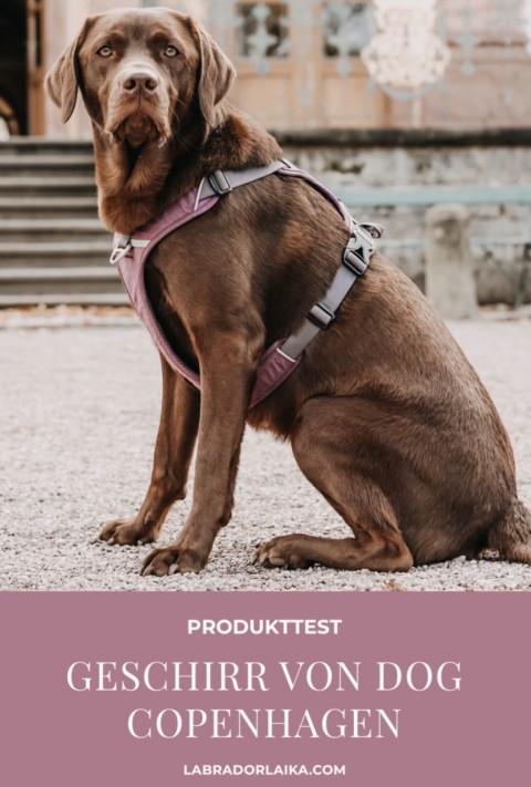 Produkttest – Hundegeschirr von Dog Copenhagen im Test