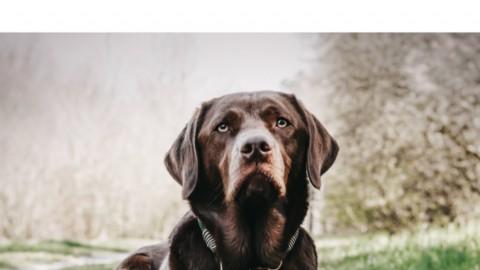 Urlaub mit Hund – Schwarzwald