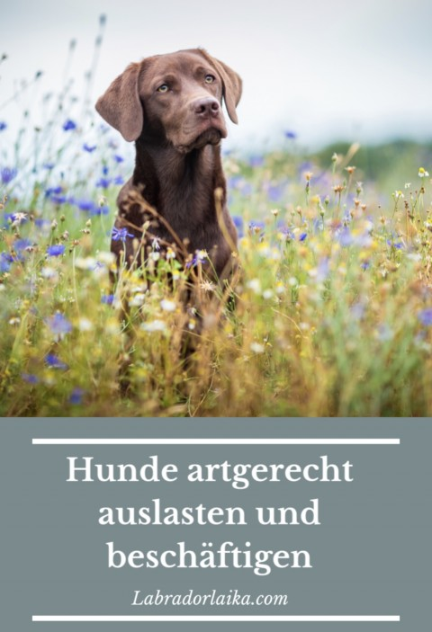 Hunde auslasten und artgerecht beschäftigen