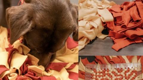 DIY Schnüffelteppich für Hunde