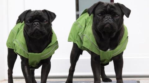 (Anzeige) Schlechtwetter gibt es nicht: Regenjacken von DogBite