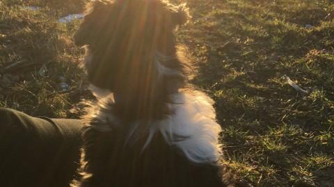 Sieh es positiv: Das Leben mit einem Artgenossen unverträglichem Hund