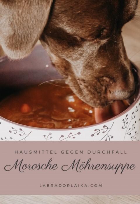 Hundegesundheit – Morosche Möhrensuppe