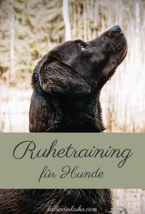 Ruhetraining für Hunde
