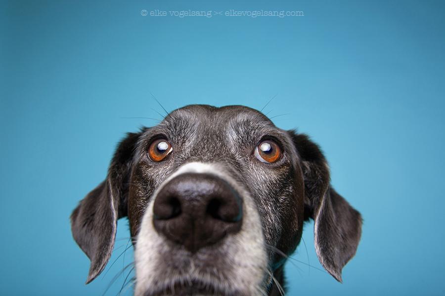 Mogelpackung Hund aus den Tierschutz?