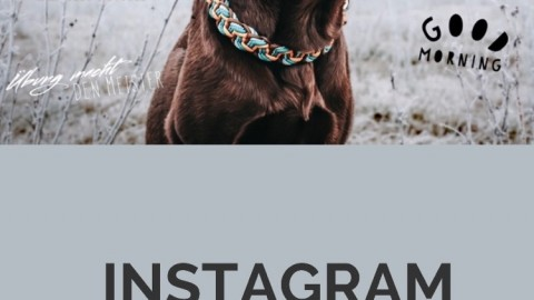 Instagram Story Sticker für Hundebesitzer