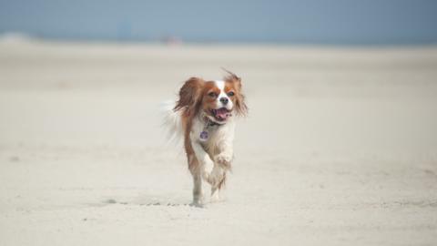 Urlaub mit Hund – Hilfe, mein Hund ist krank [Anzeige]