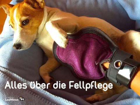 Alles über das Hundefell, den Fellwechsel und die Fellpflege des Hundes