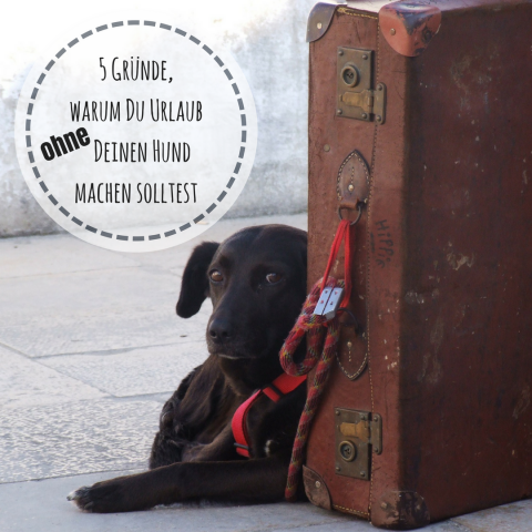 Warum Du Urlaub OHNE Deinen Hund machen solltest