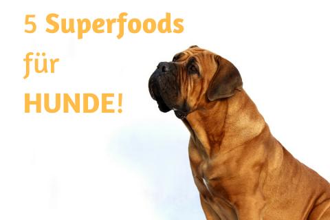 5 Superfoods für Deinen Hund