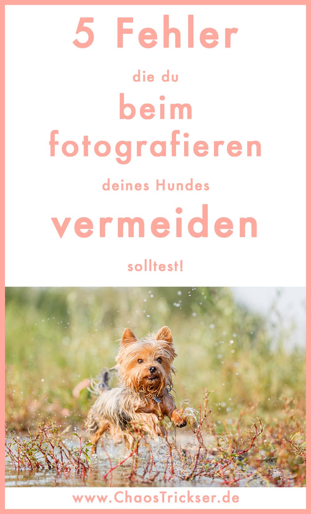 Fehler beim Fotografieren von Hunden vermeiden