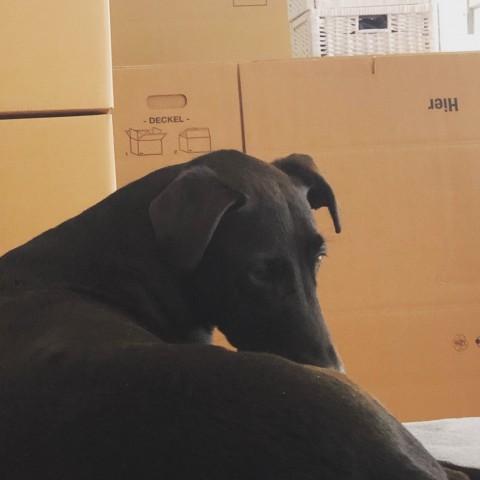 Umzug mit Hund – worauf sollte man achten?