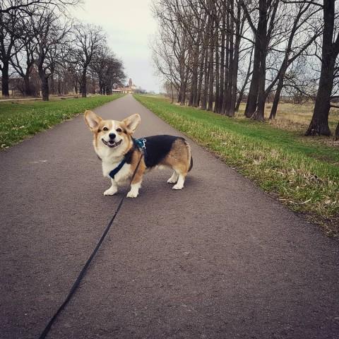 """""""Ja, aber mein Hund muss doch laufen"""" – Brut- und Setzzeit/Leinenpflicht"""