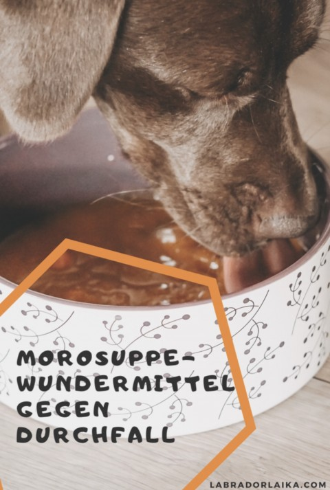 Morosuppe als Wundermittel gegen Durchfall