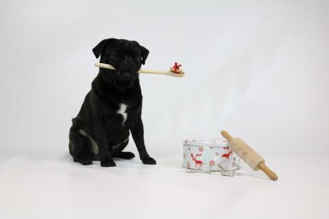 Hundekekse backen für den guten Zweck