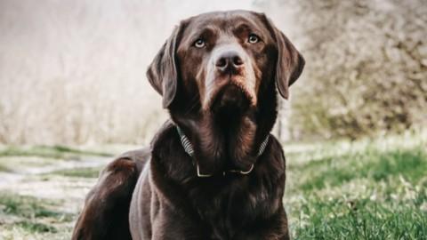 Erfolgreiches Rückruftraining Hunderziehung