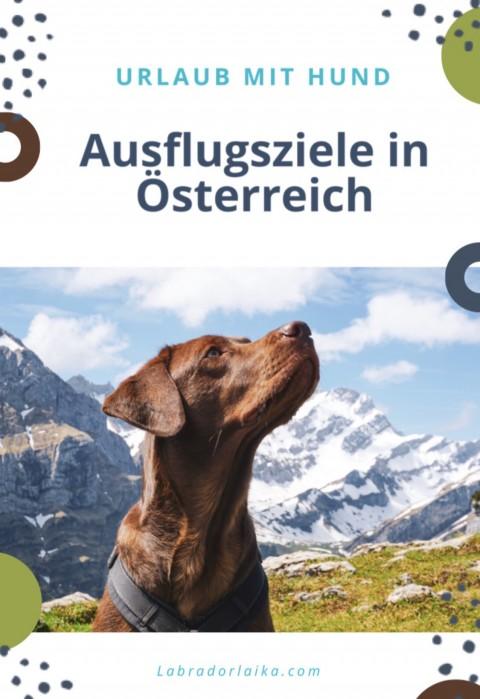 Urlaub mit Hund- Ausflugsziele in Österreich