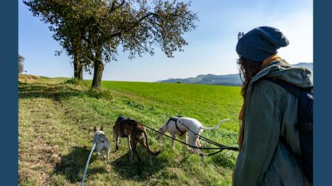Hundefreundliche Wanderung durch die Bucklige Welt in Niederösterreich