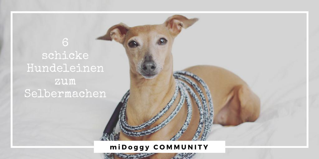 6 DIY Hundeleinen zum Selbermachen