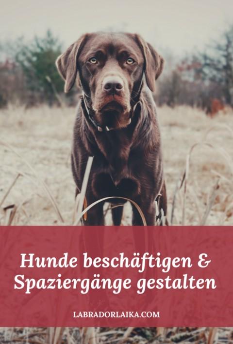 Hunde beschäftigen und Spaziergänge abwechslungsreich gestalten