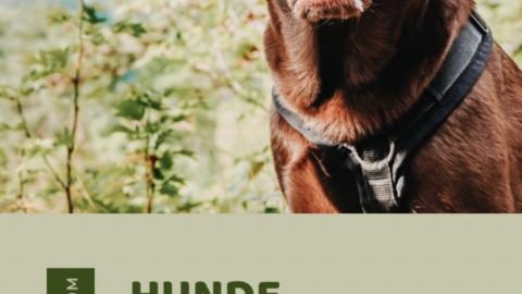Hunde beschäftigen & Spaziergänge gestalten