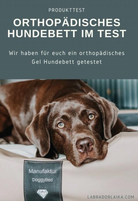 Produkttest für Hunde – orthopädisches Hundbett von DoggyBed