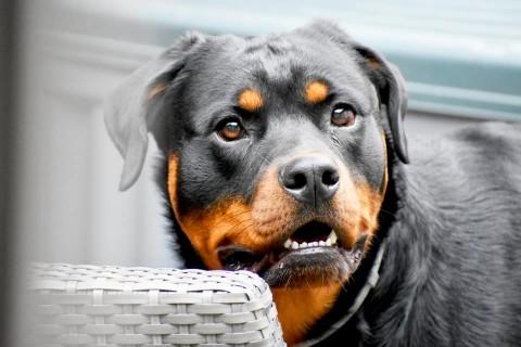 Depressionen beim Hund – Was man wissen sollte – Titi's Sprechstunde