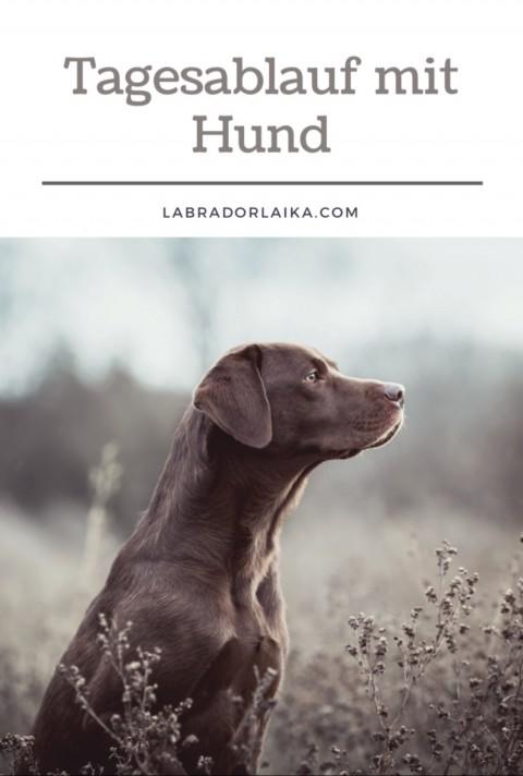 Der Tagesablauf mit einem Hund