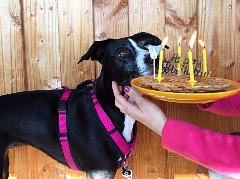Hundegeburtstag – Why have a party when you can have a pawty?